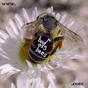 Bad Ass Bees .com